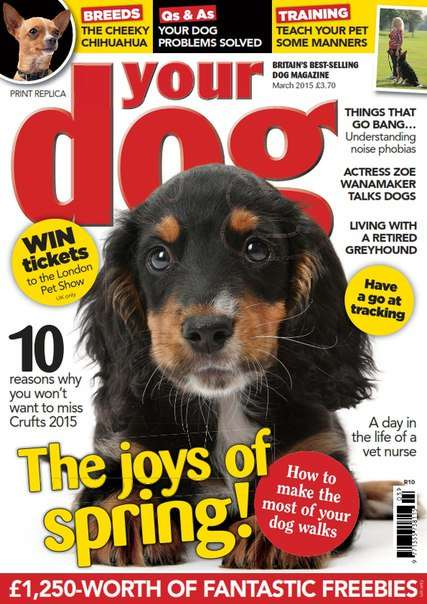 Your Dog – March 2015