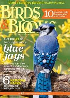 Birds & Blooms – February/March 2015