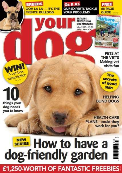 Your Dog – May 2015