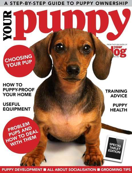 Your Dog – Your Puppy