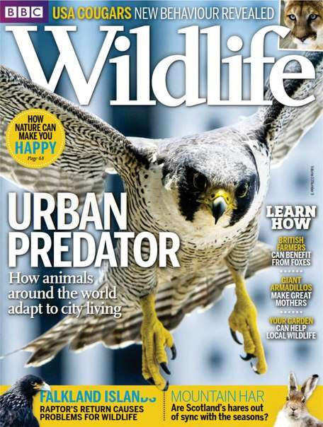 BBC Wildlife – August 2015 UK