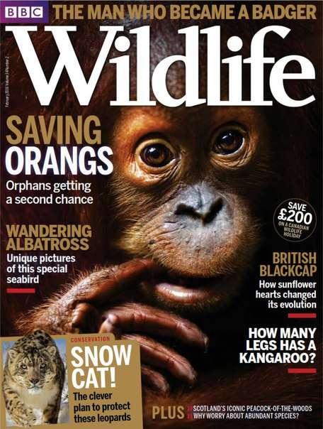 BBC Wildlife – February 2016 UK