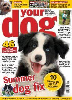 Your Dog August 2017