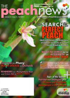 The Peach News — November 2017