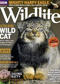 BBC Wildlife — January 2018