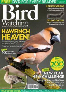 Bird Watching UK — January 2018