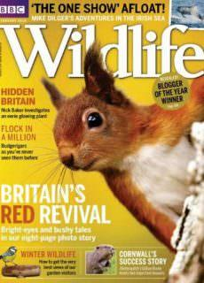 BBC Wildlife — February 2018