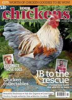 Your Chickens — January 2018