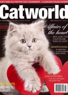 Cat World – 01.02.2018