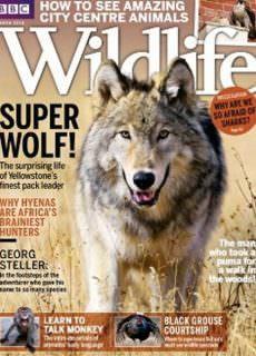 BBC Wildlife – 01.03.2018
