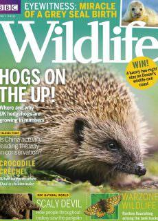 BBC Wildlife – April 2018